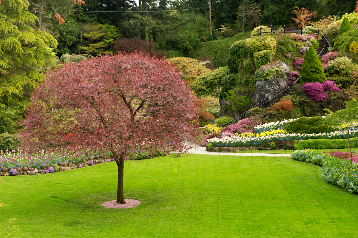 Scenes from butchart gardens rick holliday Yard and garden