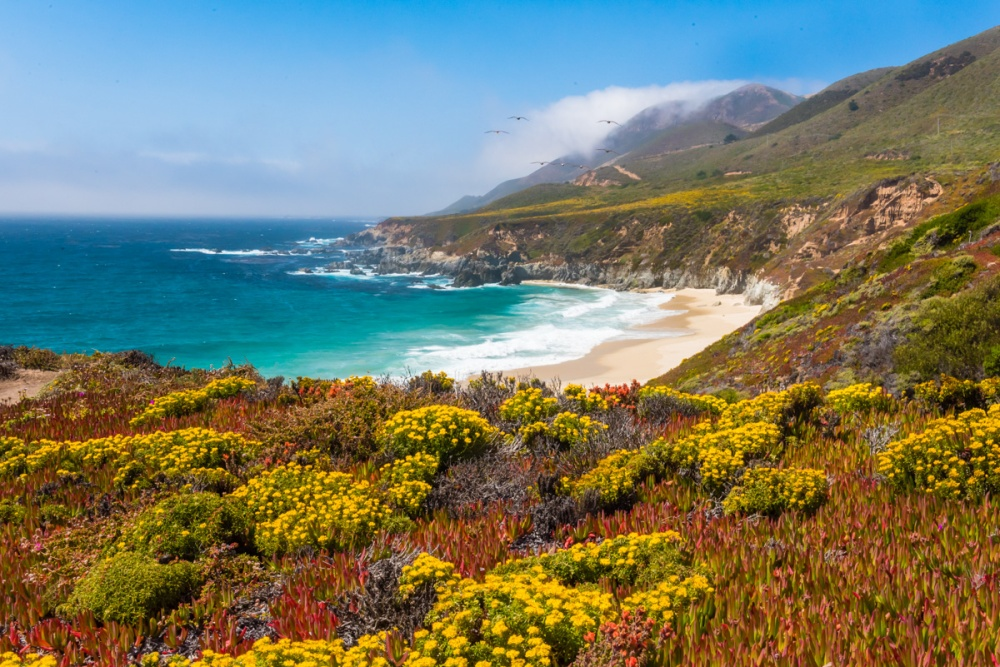 Summer on the Big Sur Coast